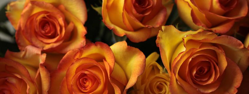 Schnittblumen Rosen orangerot